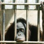 10 Γεγονότα για τους Ζωολογικούς Κήπους