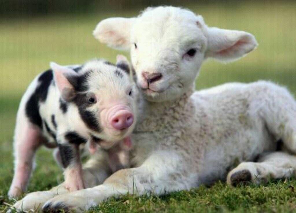 Η ψυχή είναι ίδια σε όλα τα ζωντανά πλάσματα παρόλο που το σώμα είναι διαφορετικό - Ιπποκράτης