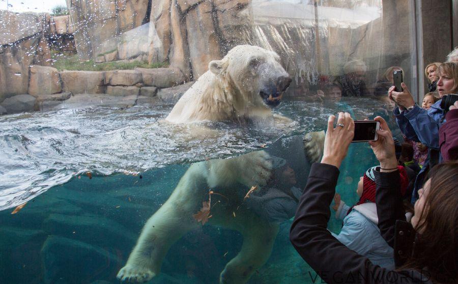 Οι ζωολογικοί κήποι δεν μπορούν να παρέχουν επαρκή χώρο στα ζώα