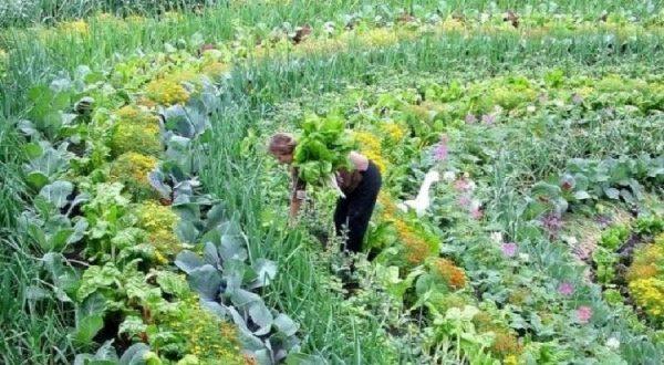 Permaculture Vs Monoculture_Περμακουλτούρα VS μονοκαλλιέργειες