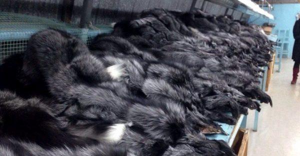 Η Σλοβακία απαγορεύει την εκτροφή γούνας...Ελλάδα