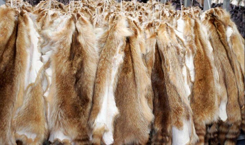Σλοβακία εγκρίνει νόμο που απαγορεύει την εκτροφή γούνας Ελλάδα