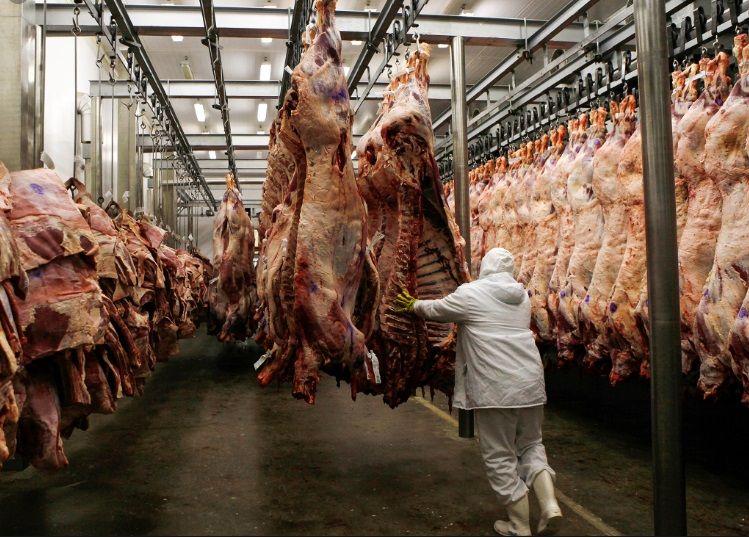 Ζώα φάρμας μαζικής παραγωγής και σφαγής - Πόσο έξυπνα είναι 2. Αγελάδες