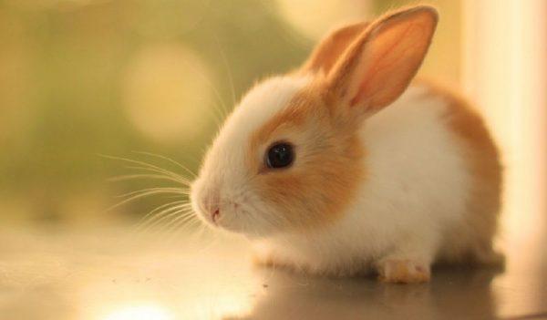 Οι ΗΠΑ είναι έτοιμες να απαγορεύσουν τις δοκιμές σε ζώα