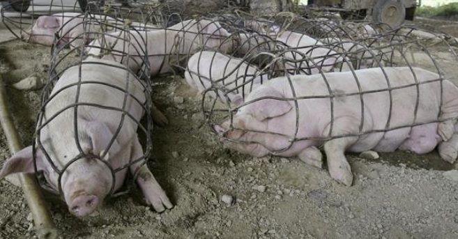 Δικαιώματα των ζώων, Ακτιβισμός και το απαράδεκτο νέο νομοσχέδιο 156