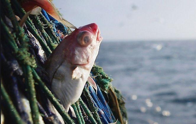 Είναι το ψάρι υγιεινό φαγητό