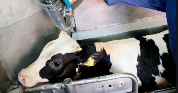 Veganuary αναμένεται να σώσει 1 εκατομμύριο ζώα από την σφαγή