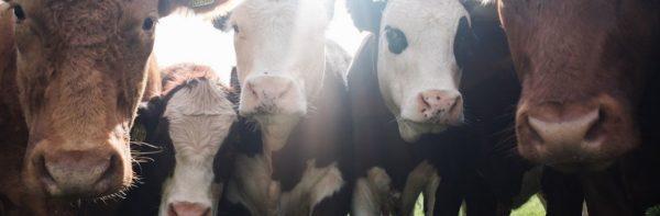 Επιβολή Φόρου Βιωσιμότητας για την κατανάλωση κρέατος συζητάει η Ευρωπαϊκή Ένωση