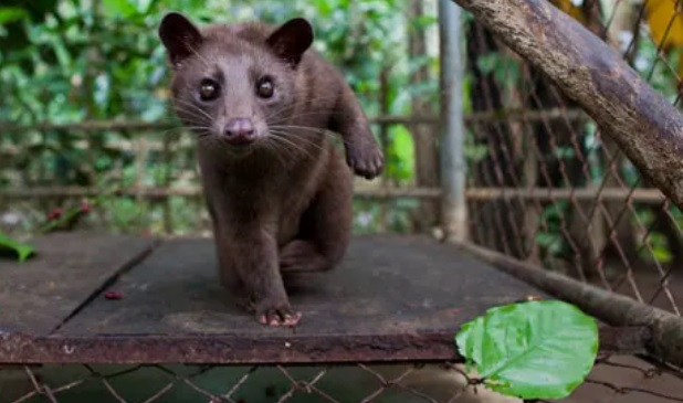 Η Κίνα απαγορεύει μόνιμα την κατανάλωση άγριων ζώων