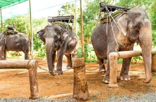 Δεκάδες ελέφαντες απελευθερώθηκαν μετά από 44 χρονιά λόγω του COVID-19