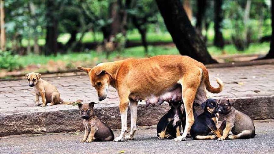 το έντυπο βεβαίωσης μετακίνησης για σίτιση αδέσποτων ζώων