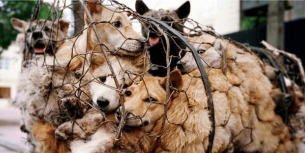 """Η Κίνα αφαιρεί τα σκυλιά από την κατηγορία """"ζωικό κεφάλαιο (livestock)"""" και θα τα θεωρεί πλέον """"ζώα συντροφιάς"""""""