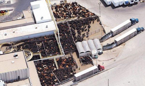 Κτηνοτροφία & Covid-19: όλα για το κέρδος