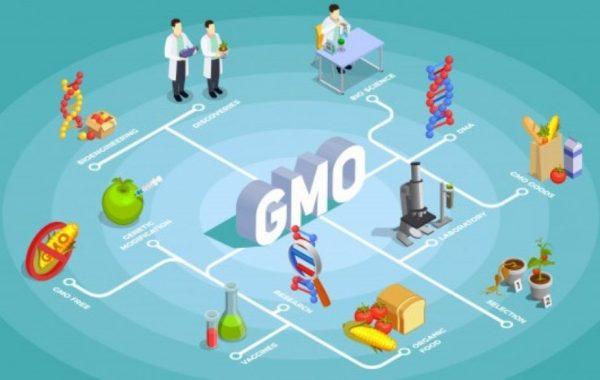 Μεταλλαγμένα - Γενετικά Τροποποιημένος Οργανισμός (ΓΤΟ-GMO) γιατί κινδυνεύουν οι παμφάγοι vegetarian και όχι οι vegan