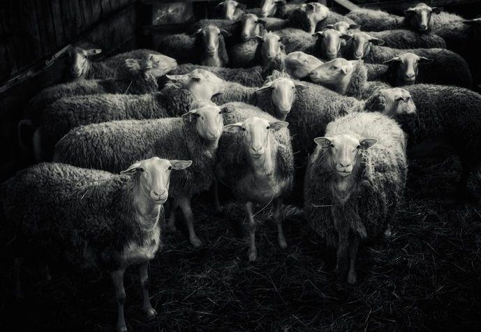 Εκατοντάδες εργαζόμενοι σε σφαγείο θετικοί στο κορωνοϊό στη Γερμανία κτηνοτροφία