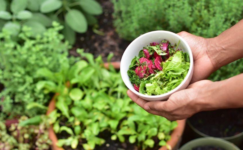 6 Συμβουλές για να φτιάξετε «Μποστάνι» στο Κήπο Ή και στο Μπαλκόνι σας