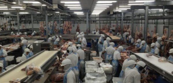 Κτηνοτροφία γενναίοι εργαζόμενοι που φορούν πάνες ενηλίκων