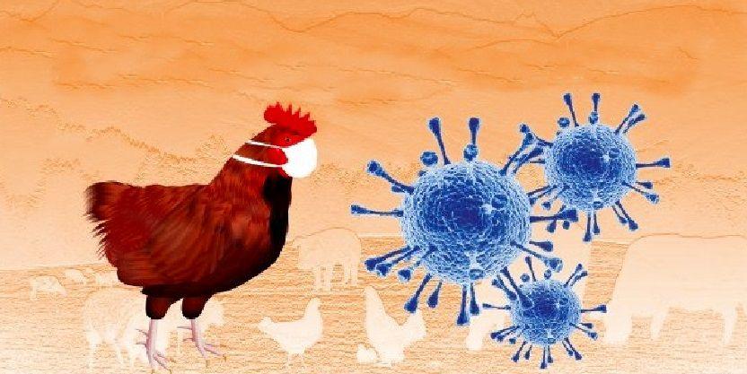 Νέα Έρευνα Ο ιός Covid-19 επιβιώνει σε κοτόπουλο, σολομό και χοιρινό για 21 ημέρες