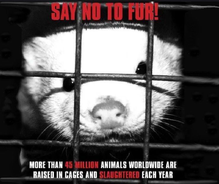 8 εκατομμύρια γουνοφόρα ζώα θα σωθούν ετησίως αν η Πολωνία προχωρήσει με την απαγόρευση εκτροφής τους