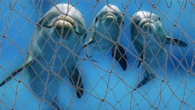 3 εκατ. ευρώ για ενίσχυση της αλιείας 50% των Φαλαινών, Δελφινιών και Φώκαινων απειλείται με εξαφάνιση