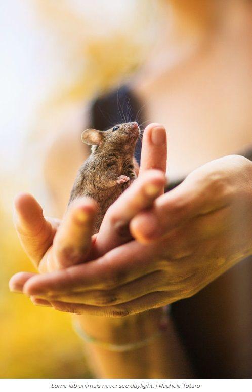Ζώα Εργαστηρίου συναντούν για πρώτη φορά τον κόσμο ήλιο φύση πειραματόζωα