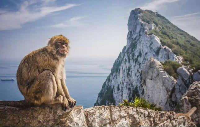 Στην Ευρώπη υπάρχει μόνο ένα είδος άγριας μαϊμούς