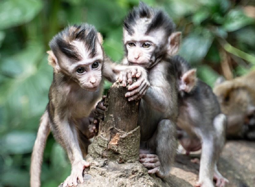 11 γεγονότα που δεν γνωρίζετε για τις Μαϊμούδες veganworld.gr