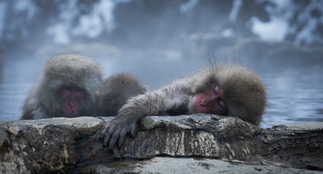 11 γεγονότα που δεν γνωρίζετε για τις Μαϊμούδες