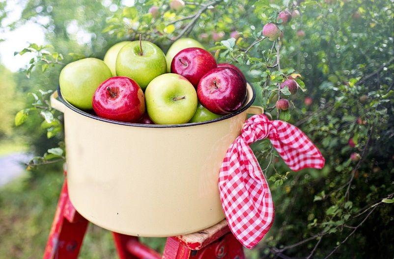11 εντυπωσιακά οφέλη για την υγεία που προσφέρουν τα μήλα
