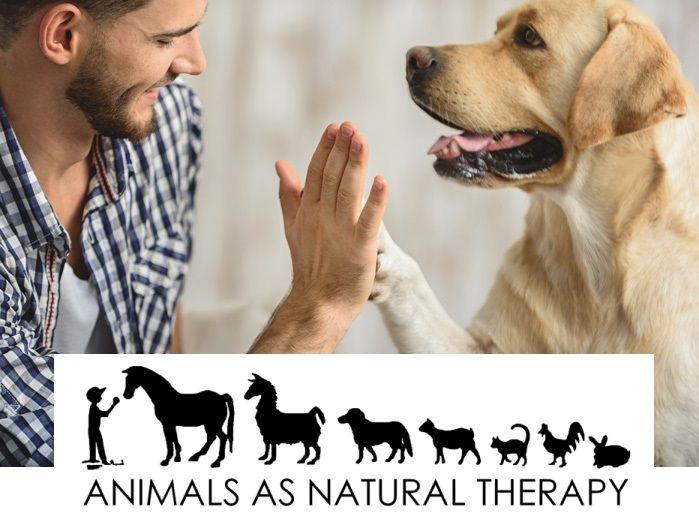 Η θεραπευτική δύναμη των ζώων