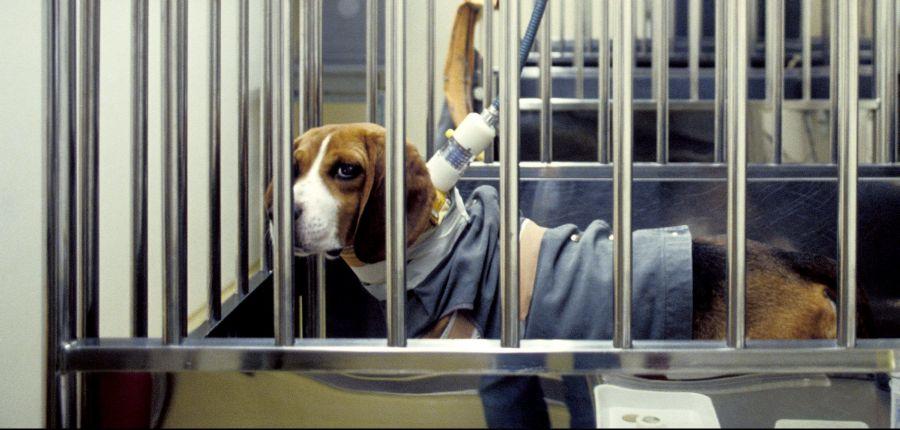 41 χώρες έχουν απαγορεύσει τις δοκιμές καλλυντικών σε ζώα, αλλά τι γίνεται με τις δοκιμές σε ζώα για άλλους λόγους covid-19