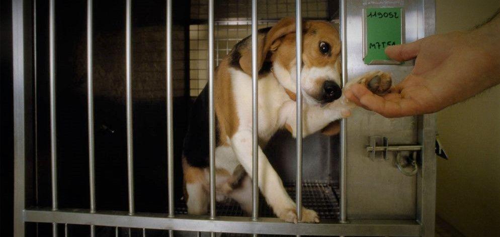 41 χώρες έχουν απαγορεύσει τις δοκιμές καλλυντικών σε ζώα, αλλά τι γίνεται με τις δοκιμές σε ζώα για άλλους λόγους